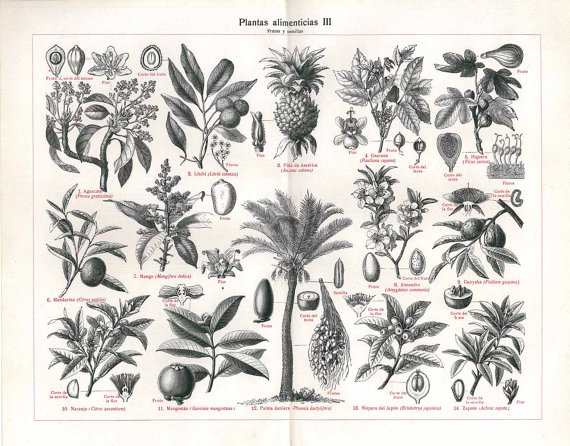 botanical chart Aedriel at Home