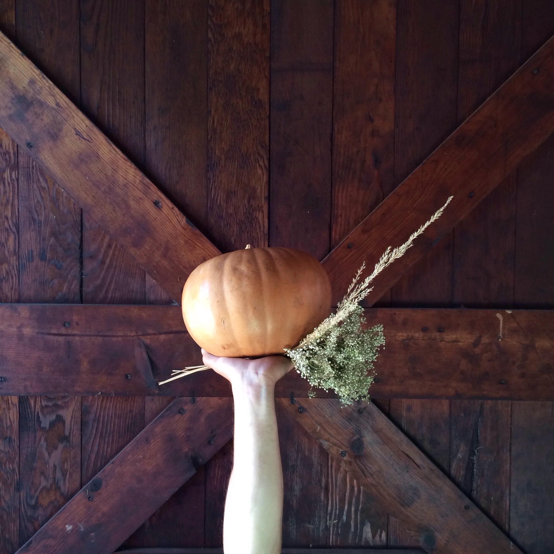 Fall at Aedriel.com